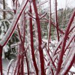 zimowy urok zamojszczyzny