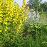 rabaty wlesie - ogrodzie